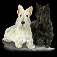 Scottish Terriers on a Custom Mermaid Sequin Pillow Design